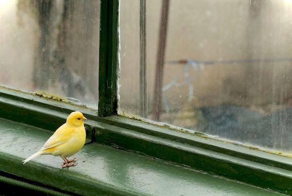 Каждое утро насыпаю в кормушку за окном пшено и хлебные крошки